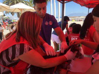 En Antofagasta: Exitosa jornada de vacunación antirrábica en balneario municipal