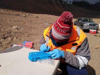 Buscan identificar microorganismos que viven en las alturas andinas