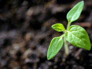 Día Mundial del Medio Ambiente: cómo cuidar al planeta desde casa
