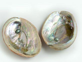 En Australia UA obtiene patente para producir perlas de Abalón