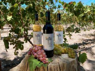 Vino patrimonial Ayllu participa en el mayor concurso internacional de vinos de Latinoamérica