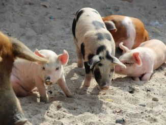 SAG Antofagasta llama a efectuar Declaración de Existencia Animal (DEA)
