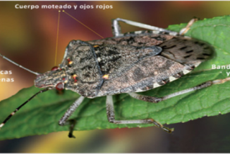 SAG dispone app para identificar plagas que están afectando a sus cultivos