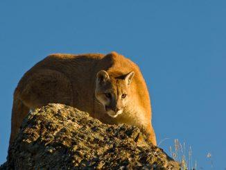 ONG Sinergia Animal en Chile: Reporte da cuenta que producción de alimentos es el factor principal de la pérdida de biodiversidad
