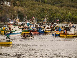 Informe anual de pesquerías evidencia mejoras en sardina, langostino y otros recursos clave