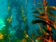 U. de Antofagasta desarrolla estudio que transformará el mundo de las algas