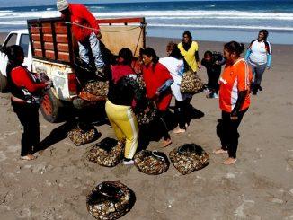 Subsecretaria crea canal de comunicación permanente con mujeres de la pesca artesanal de la región de Antofagasta