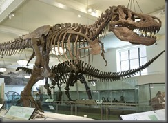 un encuentro con los dinosaurios  768x560 -tyranosaurus-rex-full-length-2460-1384_wideexact_1230 copia