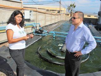 Con microalgas nativas buscan remediar aguas residuales en Antofagasta