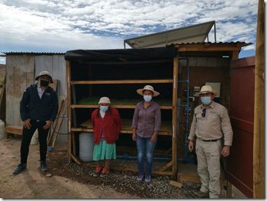 Con forraje hidropónico sustentable agricultores de Taira se reinventan en agricultura 02